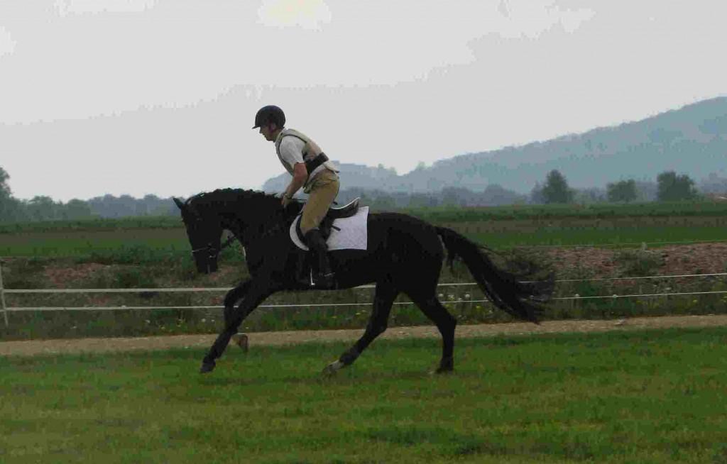 201105 Estella Vielseitigkeit