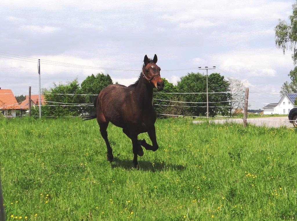 Pferde5