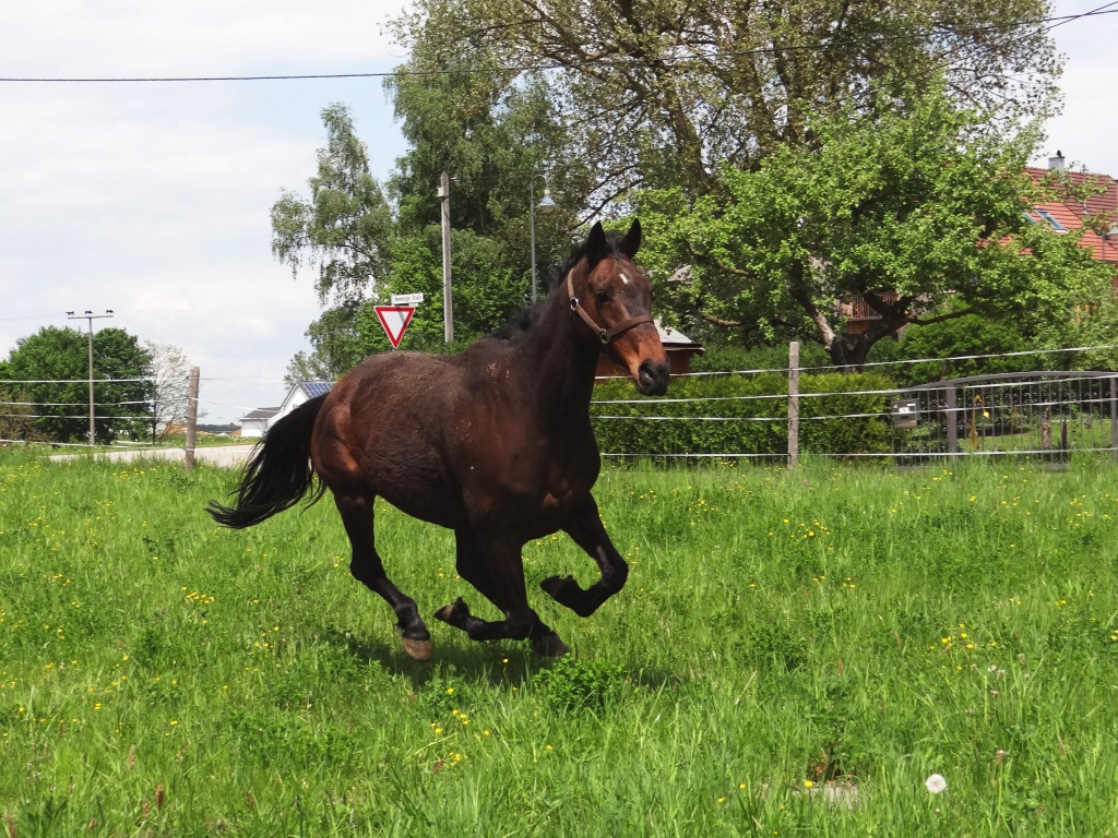 Pferde6