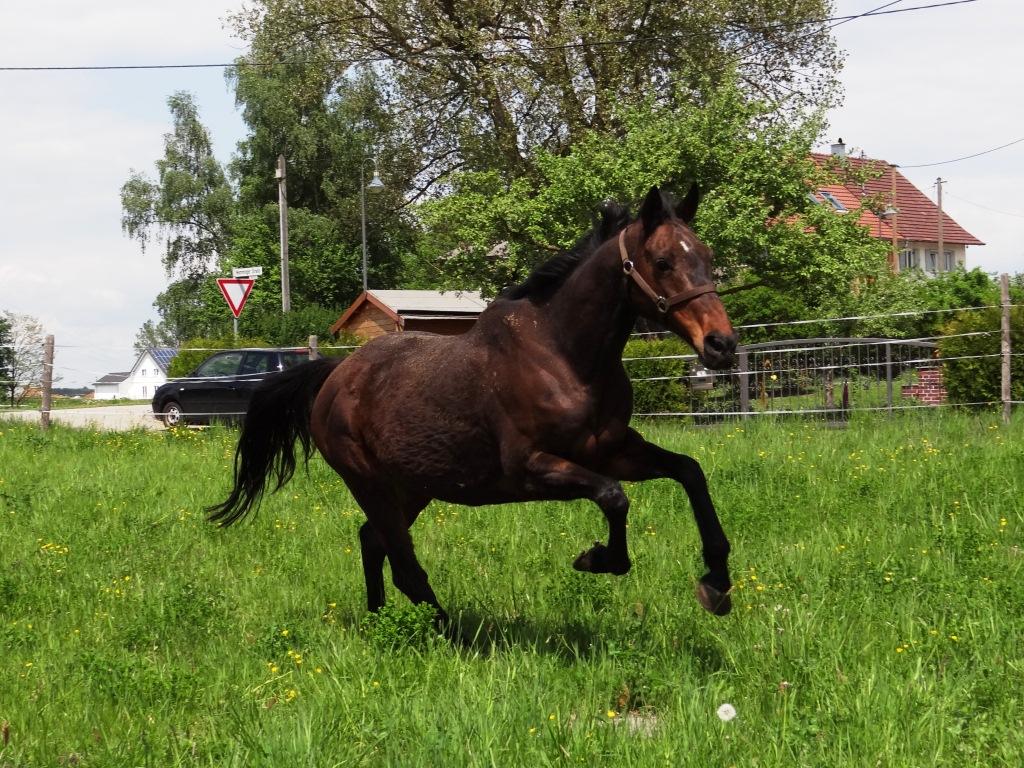 Pferde7