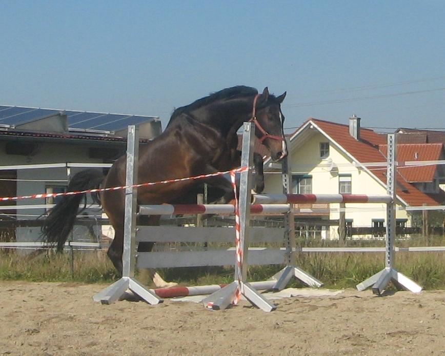 Laddie201109-1