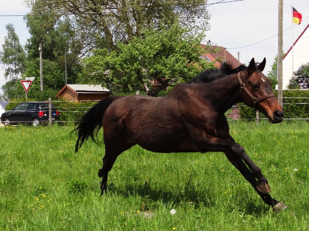 Pferde8